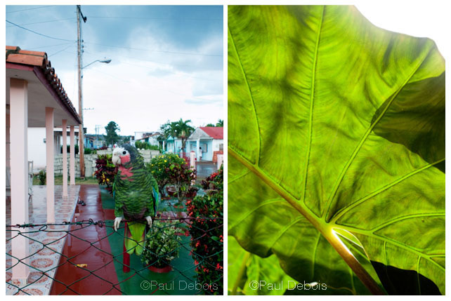 Left: Pet, Viñales. Right: Botanical garden, Cienfuegos