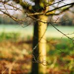 Winter light, Gunnersbury Park