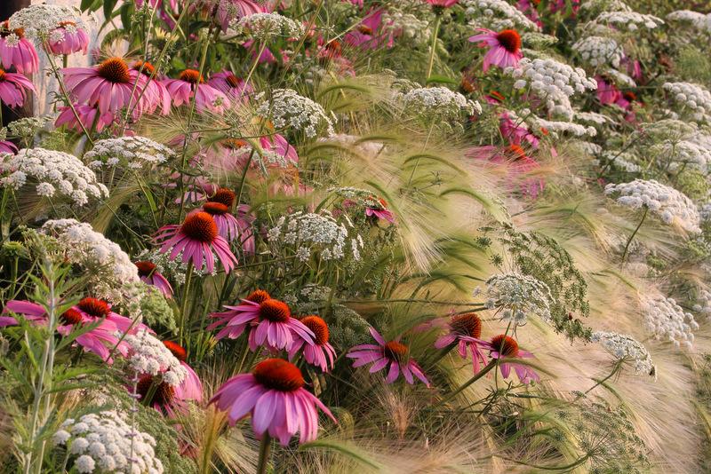 ©Rosanna Castrini My Prairie Garden