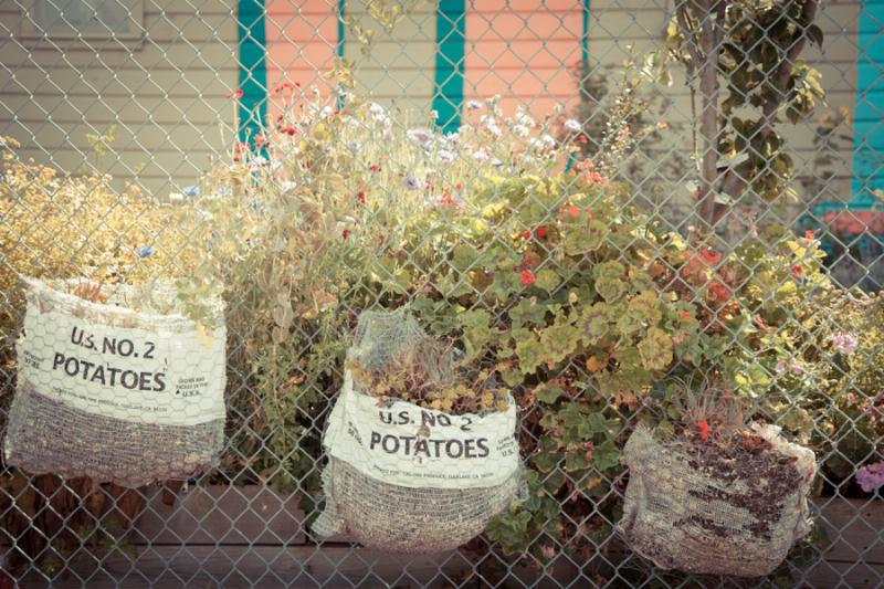©Sibylle Pietrek 'Growing Home' community garden