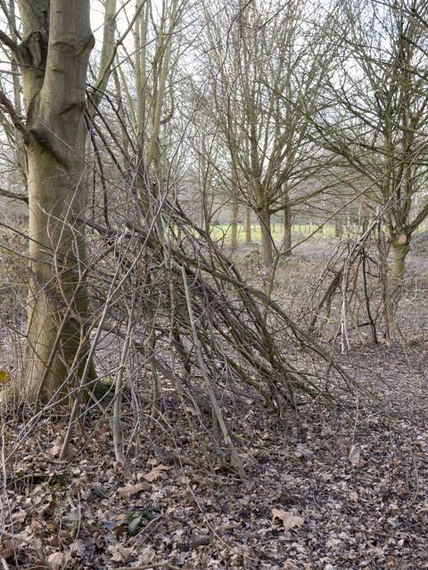 Coppicing, Gunnersbury Park
