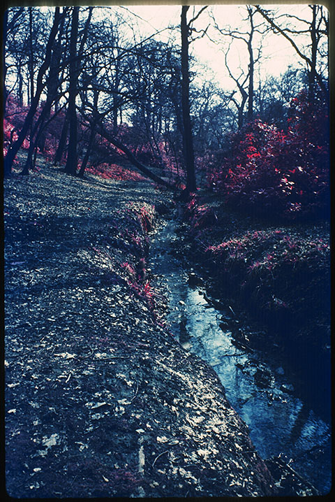 Woodland, Moat Mount, infra red