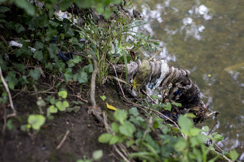 Tree root by the River Brent covered in debris from flood water