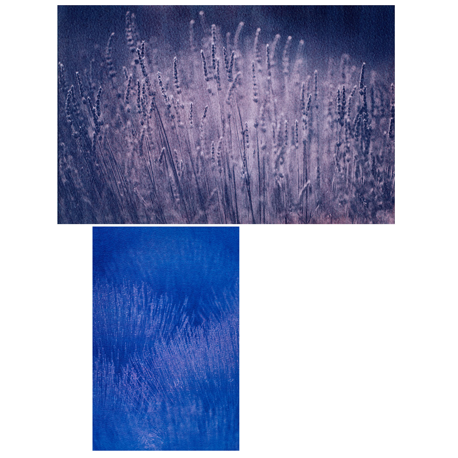 French lavender - 3 colour gum bichromate prints