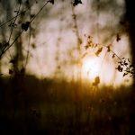 Winter light, Gunnersbury Park