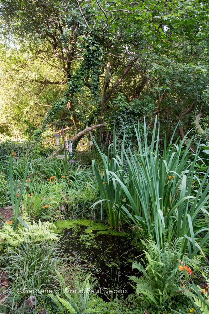 Pam Woodall, wildlife garden, Poole, Dorset