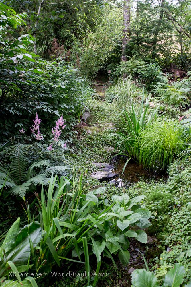 Jeremy Young, wildlife garden, Ceredigion, Wales