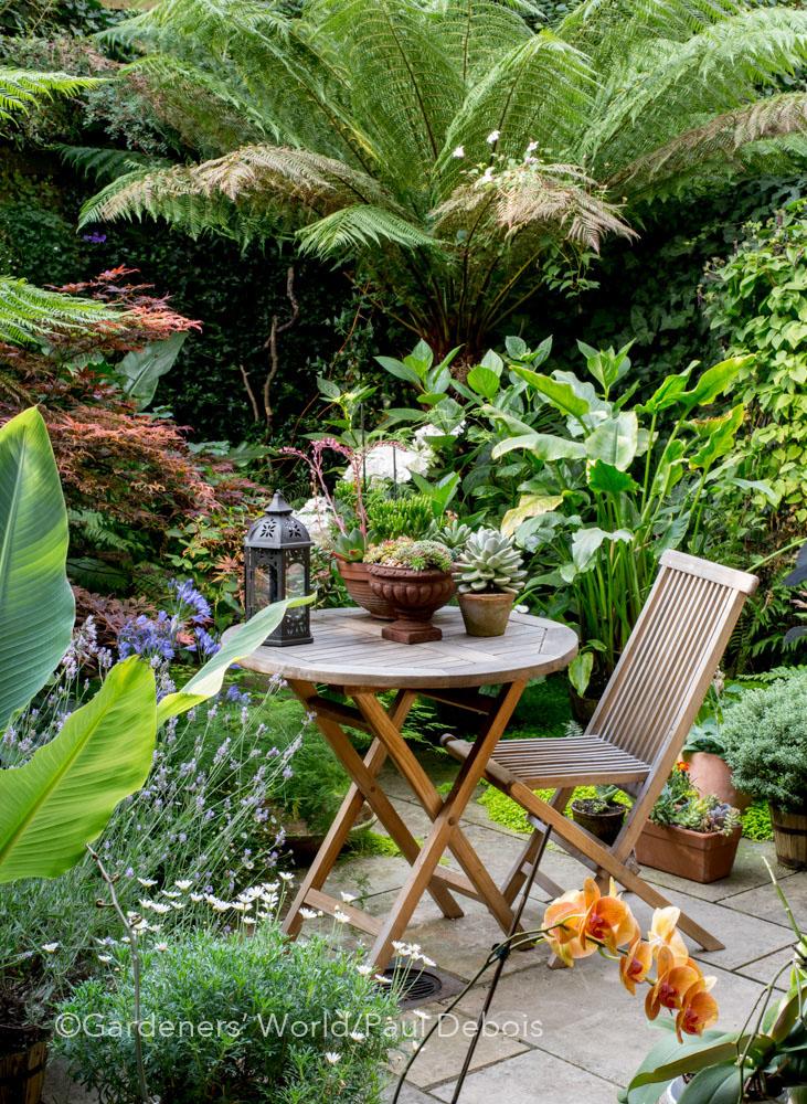 Juan Carlos, small garden, Highbury