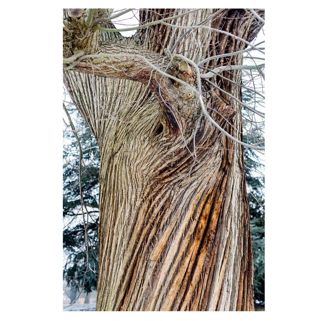 Winter Colour And Texture Paul Debois
