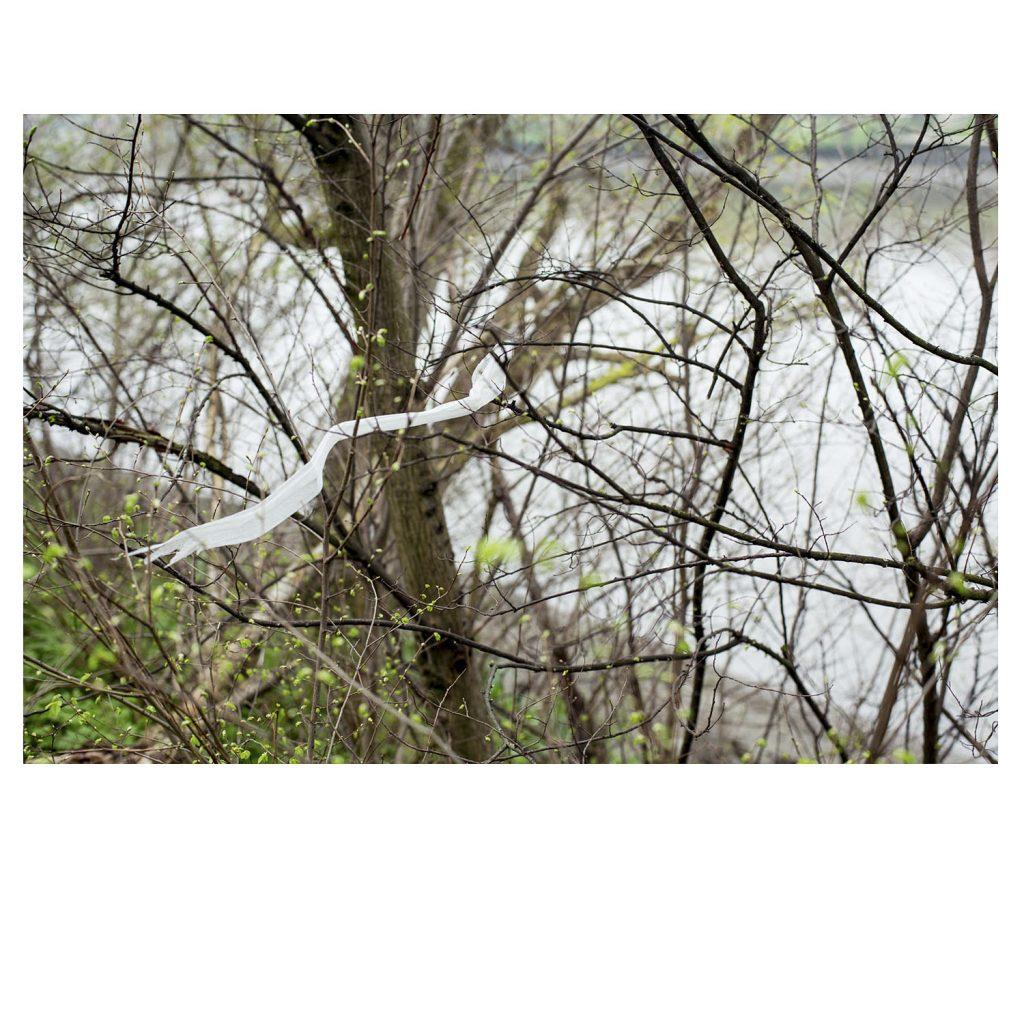 Plastic bag in tree, Mortlake
